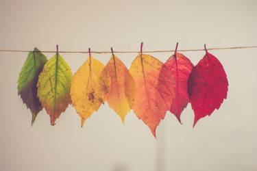 Image of 7 leaves hanging on a washing line. The first leaf is green, and the colour gradually fades, turning into red, with the last leaf being bright red